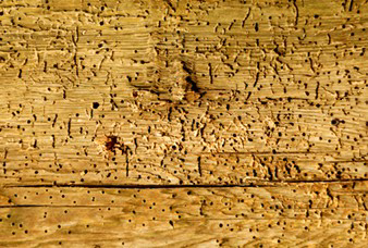 ceb_property_care_woodworm